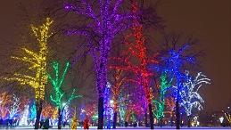 公园树木亮化要符合哪些要求?