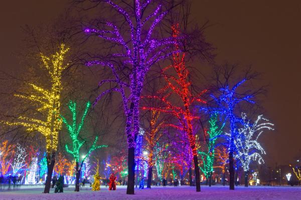 公园树木亮化