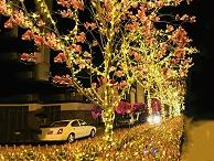树木灯光亮化-要满足亮化标准