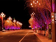 景观树亮化-应满足灯光亮化标准
