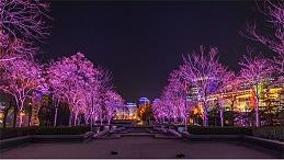 用灯光塑造符合现代审美的园林亮化设计